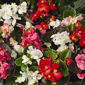 Свадебный где можно купить рассаду цветов 2000 тысячи